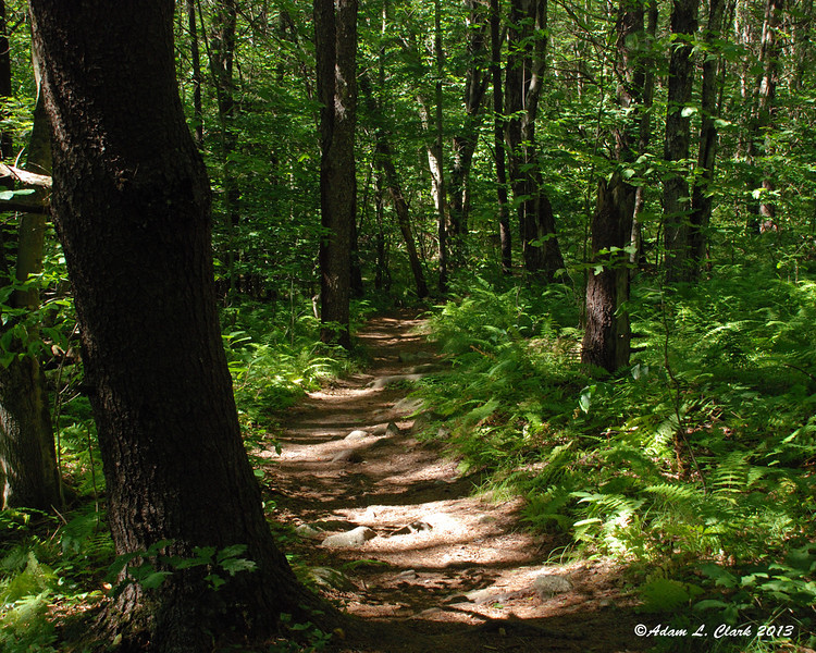 A gentle section of trail that is always nice walk