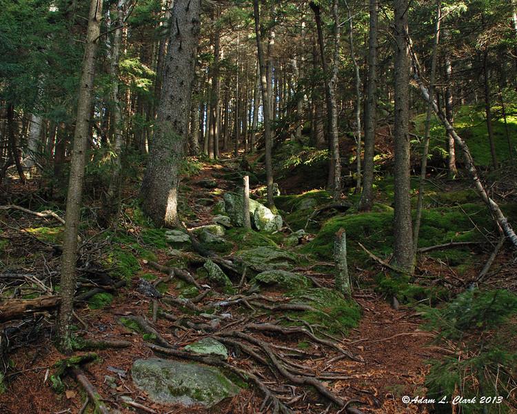 Still climbing on the Hedgehog Trail