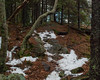 While it is winter, some sections of trail had almost no snow on them