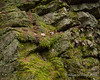 Moss and lichen growing on the rocks