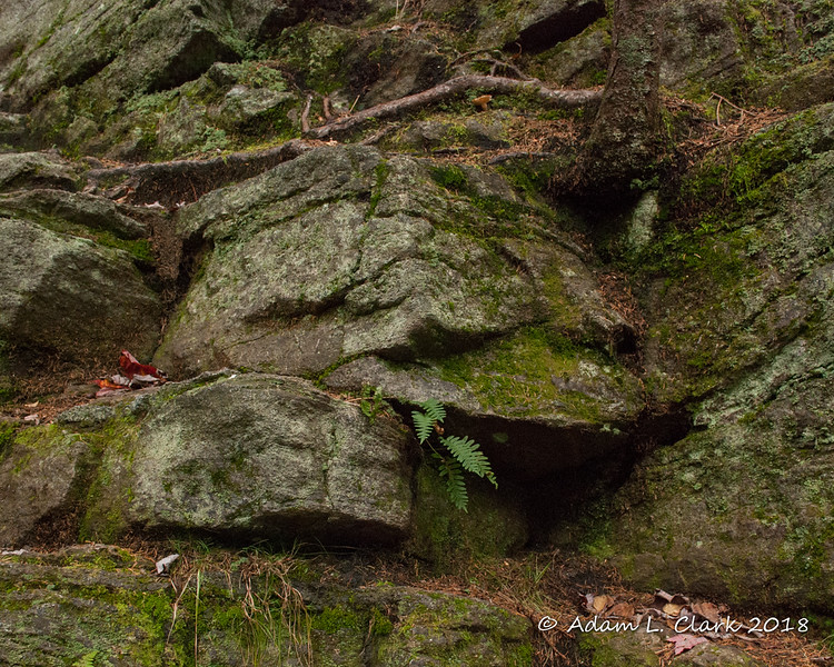 Some ferns and trees growing out of the rocks