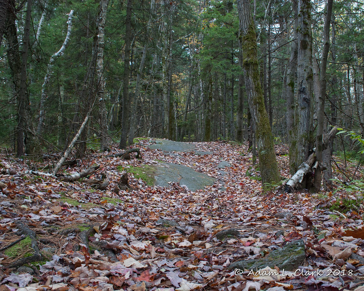 The first 1.5 miles of the trail is mostly gentle with some exposed rocks and roots