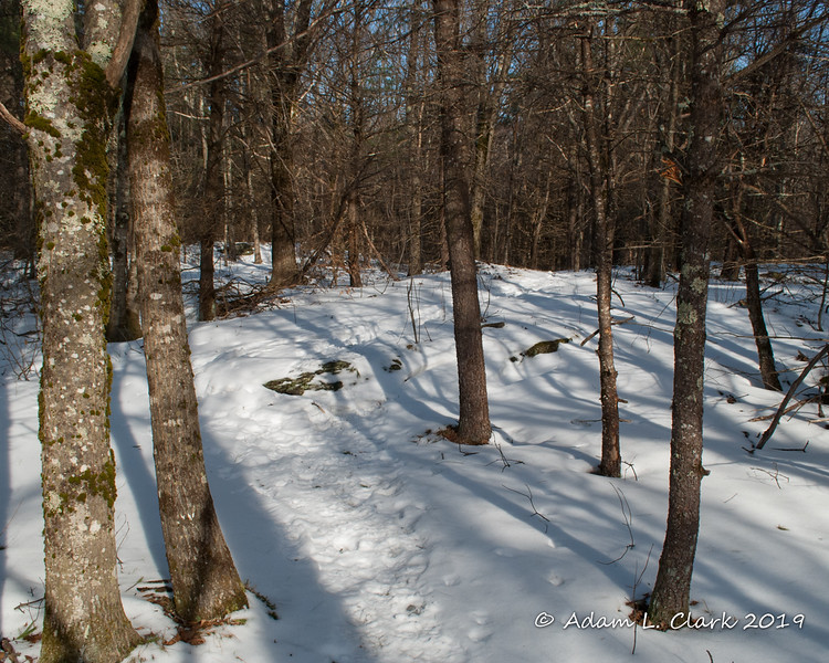 Snow covering the ground on the Halfway House Trail