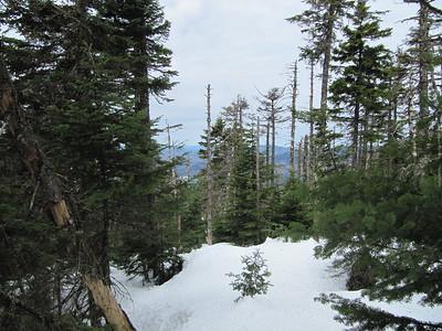 We ended up bushwhacking to Mt. Pierce.
