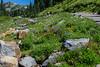 Day 2-Wildflowers along Skyline Trail 9818