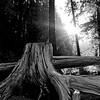 DLW Ohanapecosh Campground - Mt. Rainier backpack
