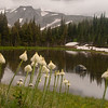 Xerophyllum tenax (bear grass) - Mystic Lake Mt. Rainier backpack - 05