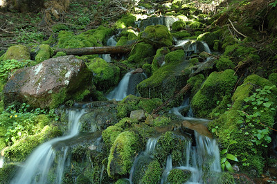 Water runs over rocks and heavy moss