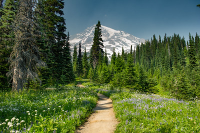 Trailside wildflowers along Van Trump Park trail. Rainier is blanked with smoke from fires in Washington and Cananda