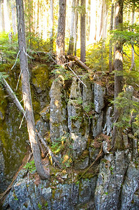 Trees grow on rock outcrop