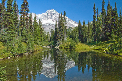 Mt Rainier reflected in a small pond