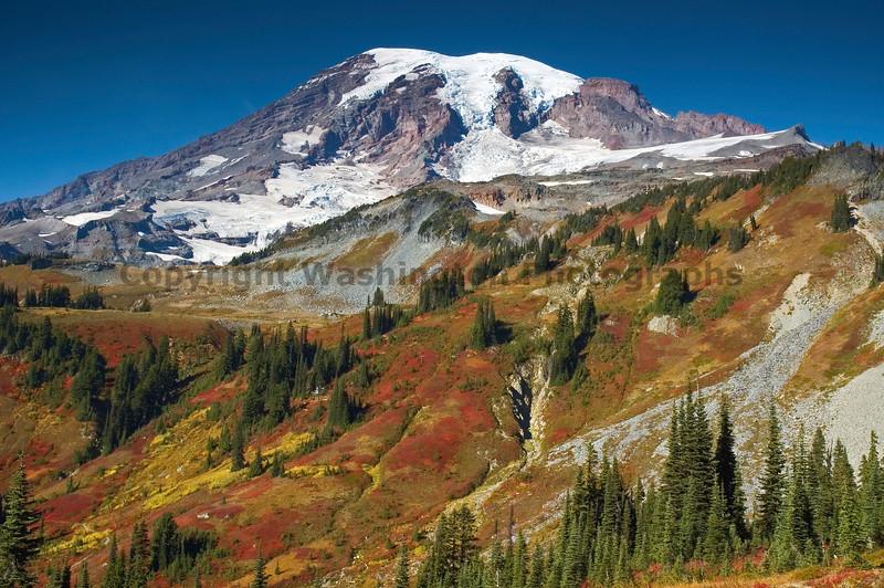 Mt Rainier Paradise 255