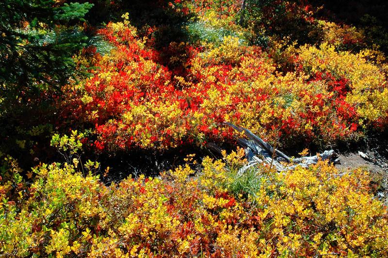 Mt Rainier Bench Lake Trail 13