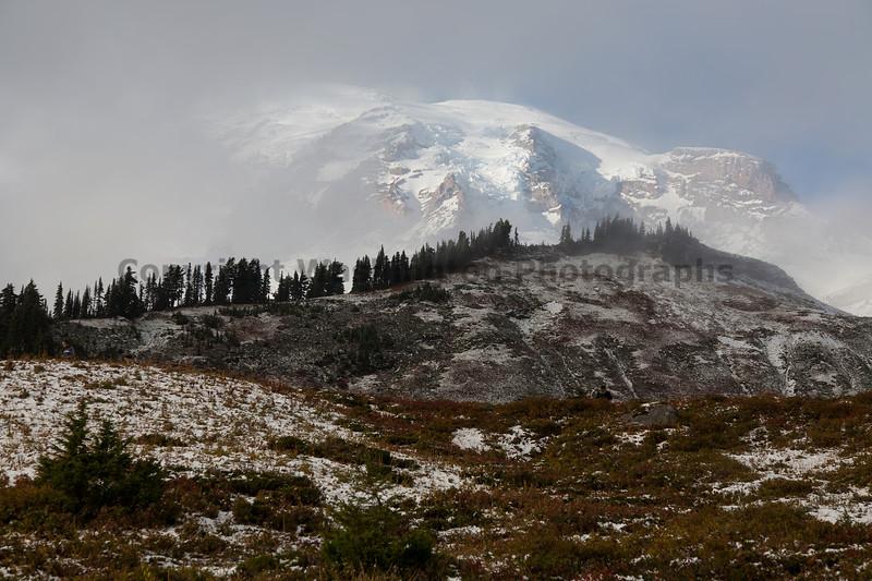 Mt Rainier Paradise Snow 103