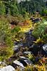 Mt Rainier Tipsoo Lake 15