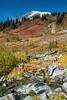 Mt Rainier Paradise 239