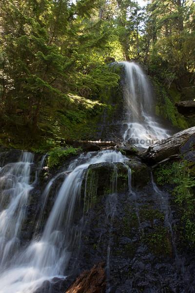Mt Rainier Roadside Waterfall 14