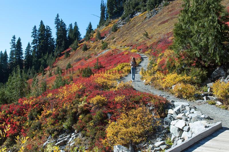 Mt Rainier Paradise 225