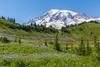 Mt Rainier Paradise 172