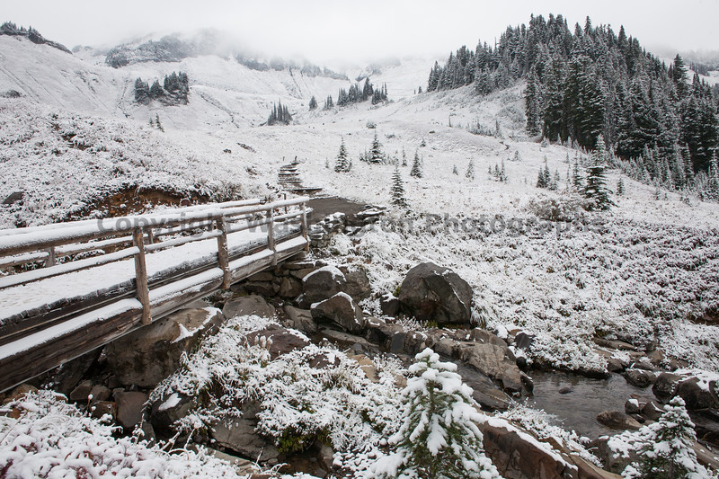Mt Rainier Paradise Snow 150
