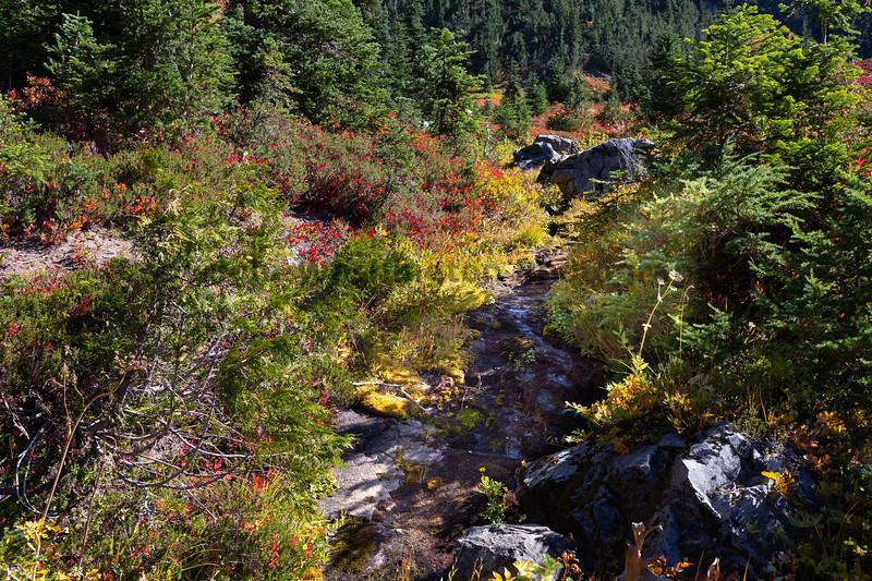 Mt Rainier Tipsoo Lake 14
