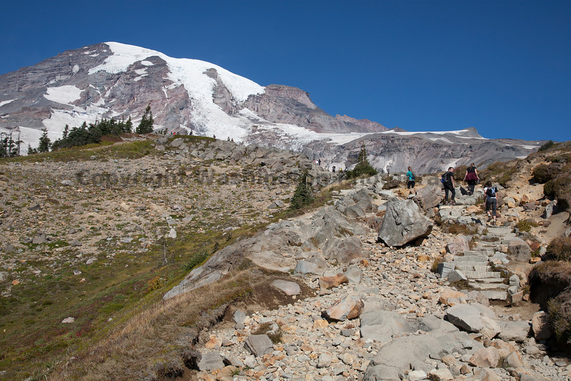 Mt Rainier Skyline Trail 103