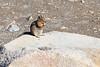 Mt Rainier Wildlife 105