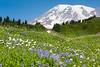 Mt Rainier Paradise 129
