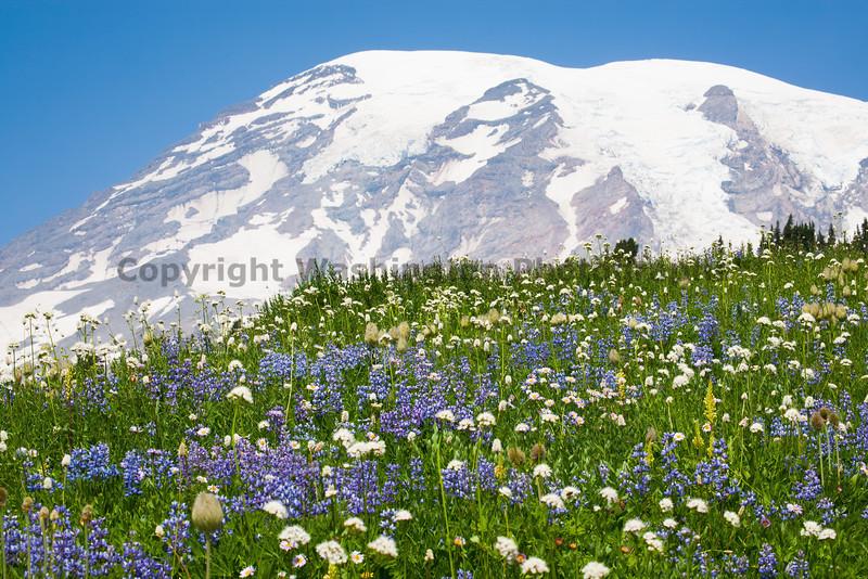 Mt Rainier Paradise 139