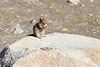 Mt Rainier Wildlife 106