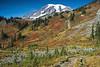 Mt Rainier Paradise 245