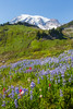 Mt Rainier Paradise 180