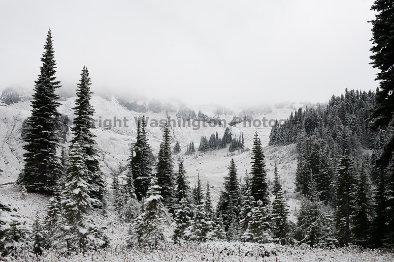 Mt Rainier Paradise Snow 153