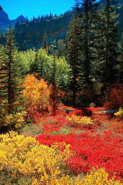 Mt Rainier Bench Lake Trail 32