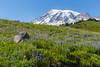 Mt Rainier Paradise 173