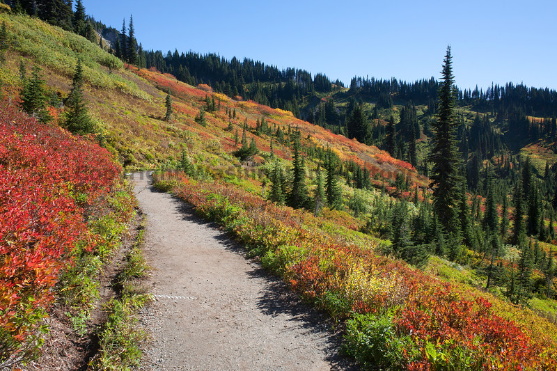 Mt Rainier Paradise Autumn 159