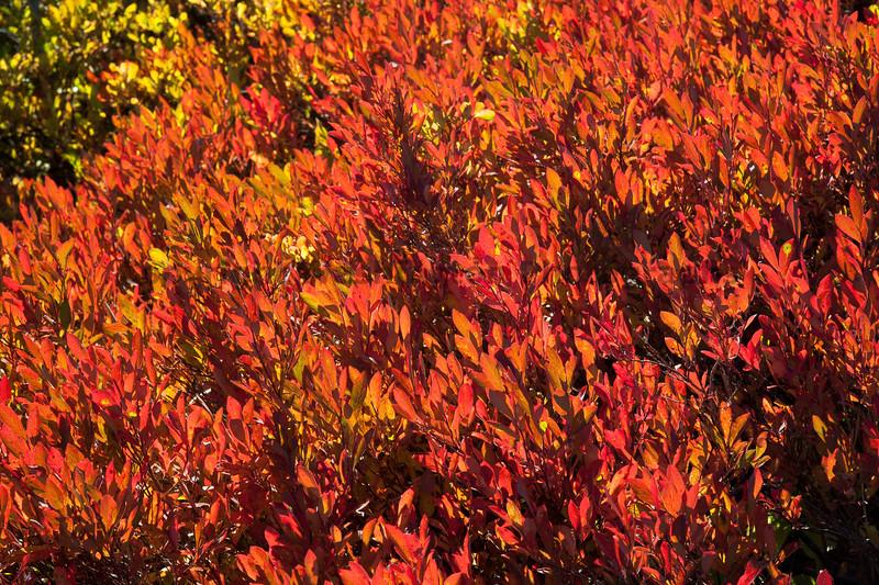Mt Rainier Paradise Autumn 112