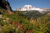 Mt Rainier Stevens Canyon 2