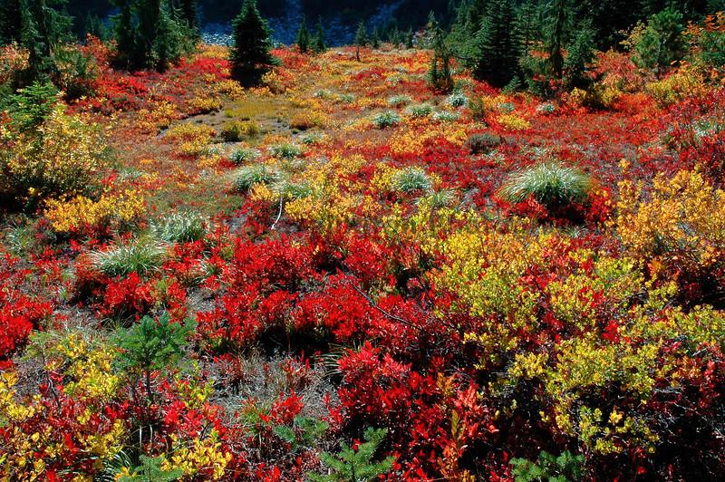 Mt Rainier Bench Lake Trail 37