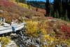 Mt Rainier Paradise 228