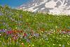 Mt Rainier Paradise 128