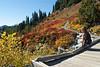 Mt Rainier Paradise 230