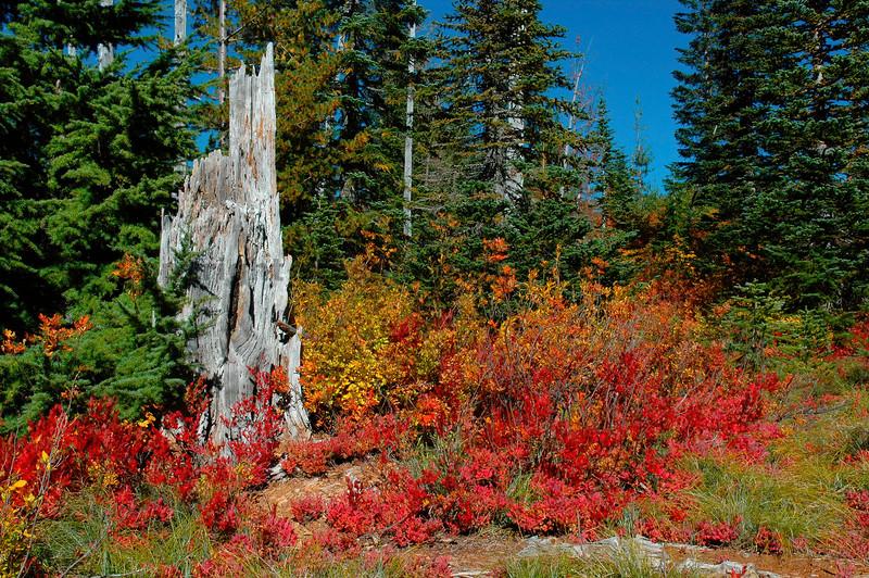 Mt Rainier Bench Lake Trail 40