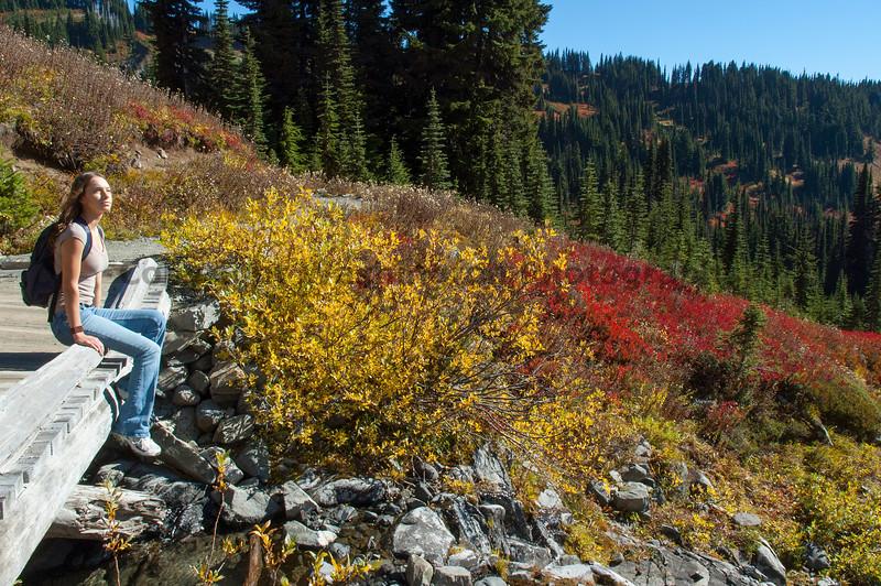 Mt Rainier Paradise 229