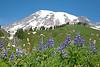 Mt Rainier Paradise 111