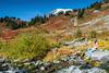 Mt Rainier Paradise 238