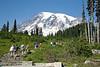 Mt Rainier Paradise 122