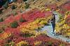 Mt Rainier Paradise 226