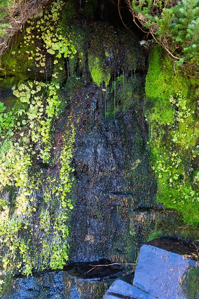 Mt Rainier Paradise Autumn 205