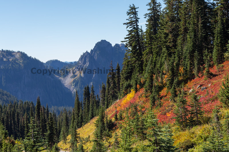 Mt Rainier Paradise Autumn 208